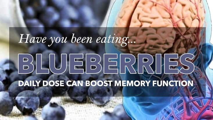 Blueberries Linked To Memory Boost